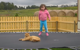 Trampoline Kitty.png